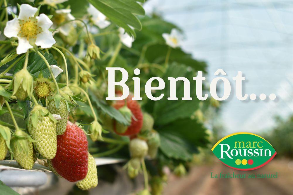 Marc Roussin producteur de fruits et légumes